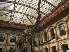 ここはブラキオサウルスの全身骨格があることで有名。 博物館に入るとすぐ、ホールにはブラキオサウルスが! 当たり前だけどものすごい大きい!ワクワクします。