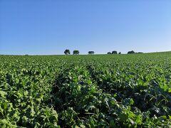 1日目は「民宿いもだんご村」にお世話になります。 これはその畑