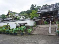 ●生蓮寺  でも、このお寺に来た目的は、蓮ではでかったのです…。