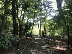 一気に森の中の雰囲気に。