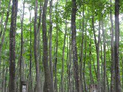 次に向かった先は、周辺の見どころをネットで調べていて名前がとても気になった美人林へ。