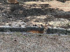 鹿が溝の中に座っているのがあちこちで見られました。
