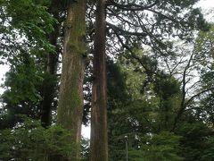 神社へ向かう前に、、、うわぁ~大きい。。。  「矢立のスギ」。  かながわの名木100選の一つだそうです。 樹齢約1200年と言われていますよー。パワースポットです。 全体の写真を撮ることが難しいほど大きな樹です。何といっても高さ35mですからねー。根元部分は苔むして年月を感じます。とても立派で見ごたえのある樹です。
