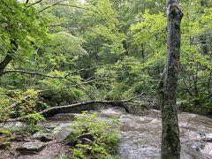 三乱の流れで下車。 雨上がりだったため歩道はぐちゃぐちゃで、渓流は濁ってた。  歩き出してすぐ遊歩道のど真ん中にでかいカエルがいた。  こんなのがいるなんて、もうこの先が怖すぎて戻ろうかと思う。