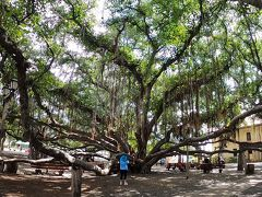 こちらも有名なバニヤンツリー。 とっても大きくて、日陰が涼しくて気持ちいい♪