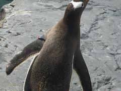 遠回りを余儀なくされて、旭山動物園 青い池から、75km 1:45かかった。  今年に入ってから、ジェンツーペンギンは3羽死んでしまっている。 かわいいのに残念。 ジェンツーペンギンは、トンボが大好きらしい。くちばしで捕獲して食べていた。
