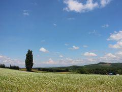 7月15日、美瑛方面へドライブです。ケンとメリーの木の周辺はやっと花が咲いてきて、その白い小さな花弁からそば畑であることがわかりました。広い丘と青い空とまっすぐ伸びる1本のポプラの木。美瑛らしい風景です。