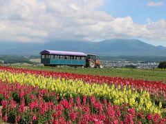フラワーランドを訪れました。今年はコロナのために畑の作業が遅れ、開園も遅れたということです。でも、多くの種類の花が成長し始めました。7月下旬~9月にかけてが見頃かなと思います。