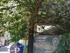堀川沿いのシドモア桜を通り、中華街へ向かいます。