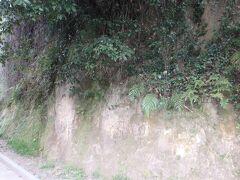 そして「鹿児島のシラス台地(の地層)」の見学へ。 城山公園展望台に地層がよく見える場所があるのです。 (城山公園展望台は、「ブラタモリ・鹿児島編」で、タモリさんがシラス台地の地層を見るために訪れた場所です。)