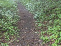 「碓氷峠遊覧歩道」 じめじめした感じ、またヒルがでそう。それほど急な坂はなく遊歩道と名前がついているだけあって、歩きやすい道が続きます。