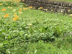 観音寺から霞丘陵自然公園に降りました。ここも彼岸花の群生地がありましたが、まだ早く、咲いているのは黄色と白のです。