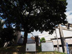 七社神社への入り口の道路に戻ってきました。 鳥居のすぐそばの、なんでもなさそうなところですが。 こちらは西ヶ原一里塚。 江戸の日本橋から日光まで続く「日光御成道」の二里目の一里塚で、徳川時代に設置されたままの位置を留めています。 都内では大変貴重なもので、国史跡に指定されているとか。