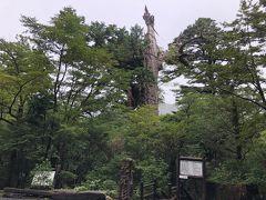 ヤクスギランドを通過し、細い道を進んで、紀元杉に到着しました。今回は特別な装備の必要な山登りをしないので、車道からも見える紀元杉は屋久杉が間近で見られるスポットとしてありがたいところです。