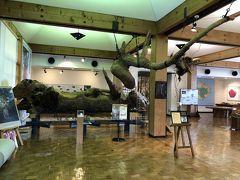 屋久杉自然館です。有料の施設ではありますが、感染対策をしながら触って屋久杉が感じられるスペースがあり、勉強になりました。