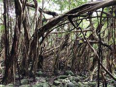 屋久島を一周する道に戻り、次に向かったのは猿川ガジュマルです。車を止めてから草が生い茂った道を少し歩いてアクセスしました。