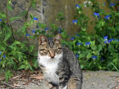 網地の集落ではいきなり美猫に遭遇。 つゆ草に合っていました。