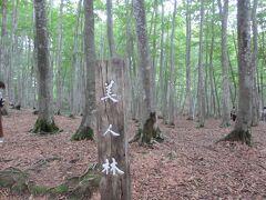 これが美人林。  紅葉の時期はメチャメチャ混むから。