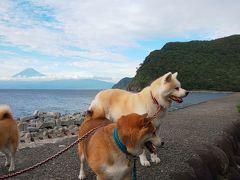 御浜岬にやってきました。 駐車場に車を停めると、休憩中のワンコさんが。 飼い主さんに許可もらって撮らせていただきました。