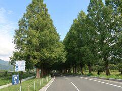 最初の目的地はメタセコイア並木道です! 一番来てみたかった場所!!!  青空と深緑♪素晴らしい風景デス(((o(*゚▽゚*)o)))♡