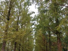 メタセコイヤの並木道 1990年開催の国際花と緑の博覧会 の会場跡です。