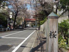 続いて福山雅治の歌で有名な桜坂にやってきました。