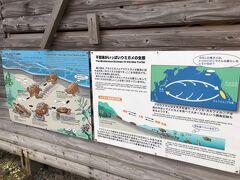 ウミガメの産地・・永田浜・・私達が行った時期は孵化の時期らしい。