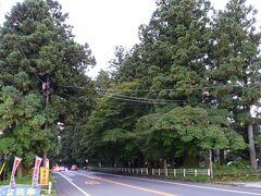 全長37㎞に渡り杉が植えられてます。