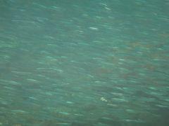 野田浜海水浴場でシュノーケリング