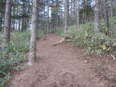 入笠湿原を抜けると、歩き易い山道。