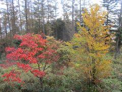 入笠すずらん山野草公園 赤・黄色の紅葉が、綺麗です。