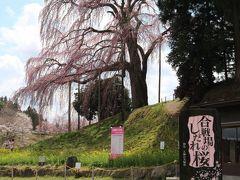 合戦場のしだれ桜  源義家と阿部定任・宗任が戦った古戦場であることが、名の由来となっている。 樹齢200年樹高18m  1本に見えるがよく見ると2本の桜