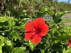 ホテルでの朝食を済ませて 屋久島空港へ送って頂きました。 どうやらこの日は、飛ぶようです。 良かったです。一安心。  空港には、真っ赤なハイビスカスが咲いていました。