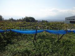 それは、ワイナリーです♪  ここがどこかというと、韮崎の郊外。