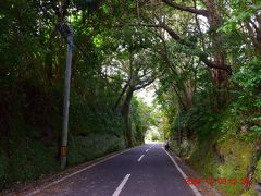 椿トンネル https://www.town.oshima.tokyo.jp/soshiki/kankou/tubaki-tunnel.html は読んで如く、椿の木がうっそうと茂ってトンネルのようになってる道。
