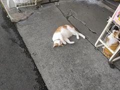 強羅に着くと、宿からの送迎を待ちます。駅前のお土産やさんにいたぬこ。よくこんなとこで寝るねwかわいいw