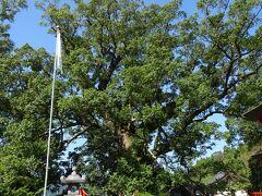 日本一の大クス(樹齢1500年)昭和63年に認定された。)