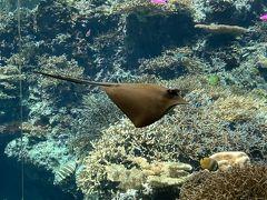 美ら海水族館、 結構な混み具合です。 最初はエイさん。