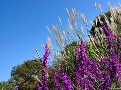 ススキと紫の花とのコントラストが綺麗♪