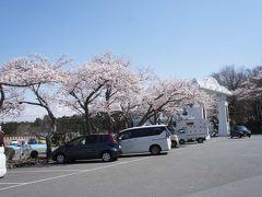 食後は、桜を見に富士仏舎利塔平和公園へ  以前はインバウンドのお客さんが多かったらしいけど、今年は閑散とした雰囲気 ゆっくり公園内を散歩しましょう