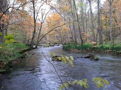 そして、流れが穏やかなところは落ち着いた雰囲気。  奥入瀬っぽい景色となると、こちらですかねぇ。