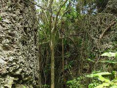 バリバリ岩(ビロウの木)