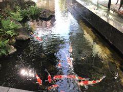 レストラン脇には、池があって鯉が泳いでいたり