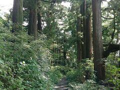 箱根旧街道の杉並木です。横は道路ですが見えません。コンビニ近くで終りました。 コンビニで小休止です。水分補給して美術館へむかいます。