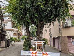 不思議なお社、多分、切ってはいけない木なんでしゃうね… 午後は真田幸村縁の地へ。