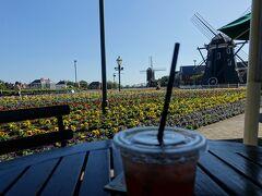 最終日。 朝は昨日と同じアンカーズラウンジでのブッフェをいただきました。 内容的に変わりがありませんでした。  風車のエリア、花畑でまったりとお茶します。