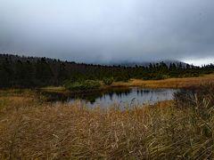 睡蓮沼。八甲田の山々が鏡像を作るはずだが、お天気が悪かった。