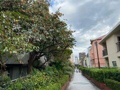 桃園川緑道です。