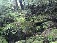 苔むす森のあたり。ここまででスタスタ登って1時間くらいでした。