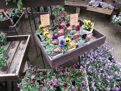 隣の紀伊国屋で輸入食材を見た後、お店前の珍しいお花を見ます。